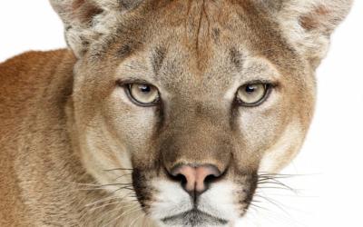 OS X Mountain Lion: quelles sont les nouveautés?